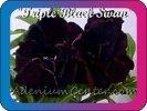 продам семена экзотических растений - Страница 3 1351ef92e240