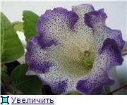 Семена глоксиний и стрептокарпусов почтой - Страница 8 327874ee0cf9t