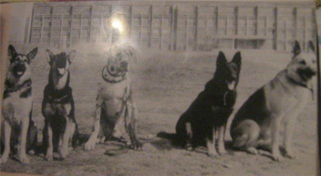 """Питомник """"Прима Персона"""". Мои собаки-моя жизнь! 066df3d34778"""