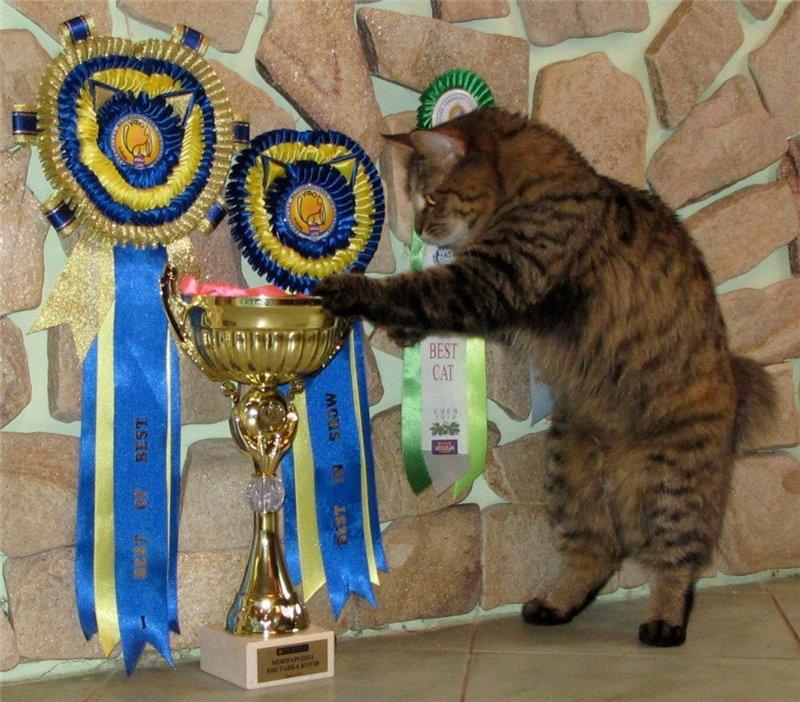 Домашние любимцы Кошки и Собаки D0b1c00ccad8