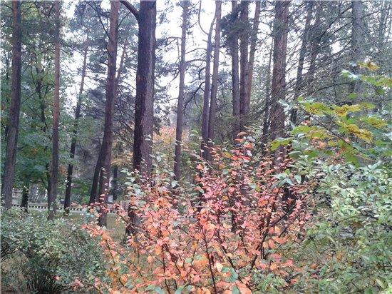 Осень, осень ... как ты хороша...( наше фотонастроение) - Страница 5 7fb1ff2ee3b8