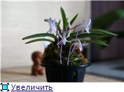 Sevgilim ( мои любимые) D904c4a02bbbt