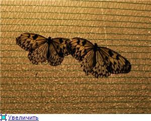 Выставка живых бабочек в Хабаровске. 86b213cfa160t
