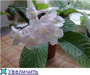 Семена глоксиний и стрептокарпусов почтой - Страница 8 E33e19f4af7dt