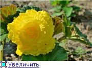 бегония - Страница 5 66c6bfec4eaet