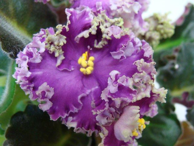 Мои цветочки - Страница 30 E79a219cdfe2