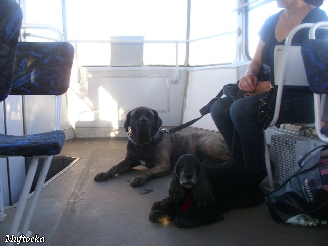 Собаки Татьяны Моисеенковой, кот Мензурка - Страница 4 E6b08477d7cf