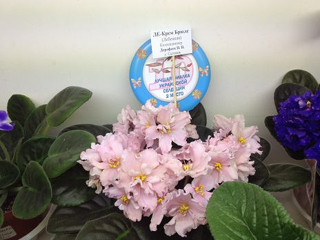 Выставка цветов - Страница 2 049d53c1dec7