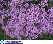Растения для альпийской горки. 6b074d557ad9t