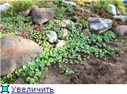 Ужас в саду B2d1c5455adet