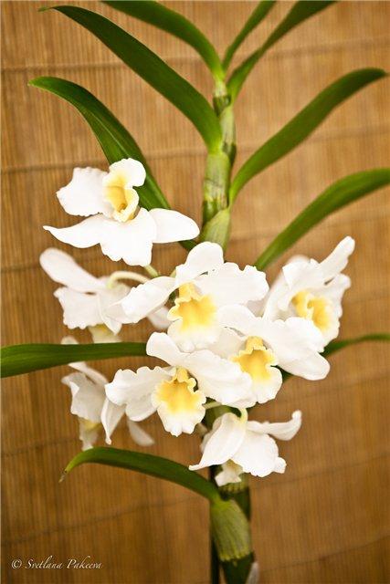 Выставка орхидей в Государственном биологическом музее им. К.А.Тимирязева 025ad31569d8