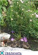 Растения для альпийской горки. - Страница 2 421704f5d6f7t