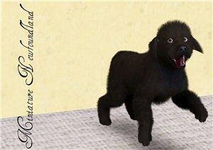 Собаки - Страница 5 213579185c18