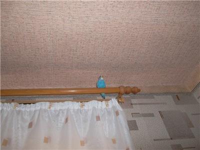Наш красавчик попугай Кузя 9df86ba796f1
