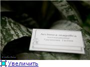 Выставка орхидей в Государственном биологическом музее им. К.А.Тимирязева 0c204422febct