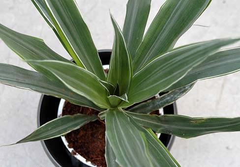 Растения, связанные с драконами 969a365e86e2