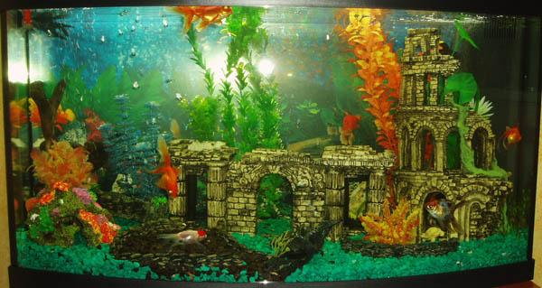 Конкурс аквариумного дизайна Юга России 2013 625190c2e146