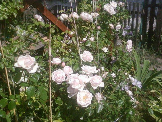 Ландшафтный дизайн... Сделаем свой сад самым красивым! - Страница 4 D7a97568fbc2