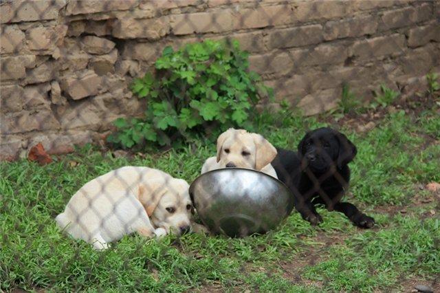 "Питомник ""Прима Персона"". Мои собаки-моя жизнь! - Страница 2 5b6040f1aeb4"