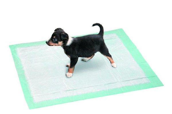 Интернет-магазин Red Dog- только качественные товары для собак! 98f5a445724d