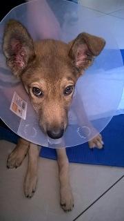 Малыш совсем щенок, сбила машина. Срочно нужна операция!!! 4786064a0c9c
