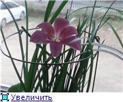 Зефирантес - Страница 2 90d08e143a40t