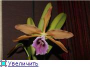 Sevgilim ( мои любимые) 5c7e4a9a93e4t