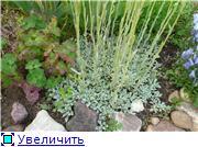 Растения для альпийской горки. 172da7912be6t