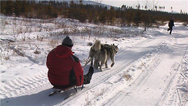 Аляскинские маламуты в Чите - Страница 2 7ad25d1ef990