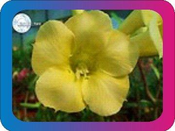 продам семена экзотических растений - Страница 3 B9efe5c2115f