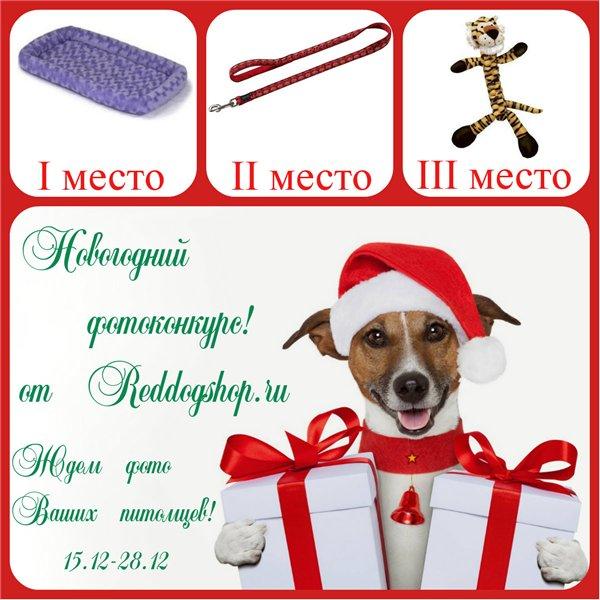 Интернет-магазин Red Dog- только качественные товары для собак! 29c5b8aa374e