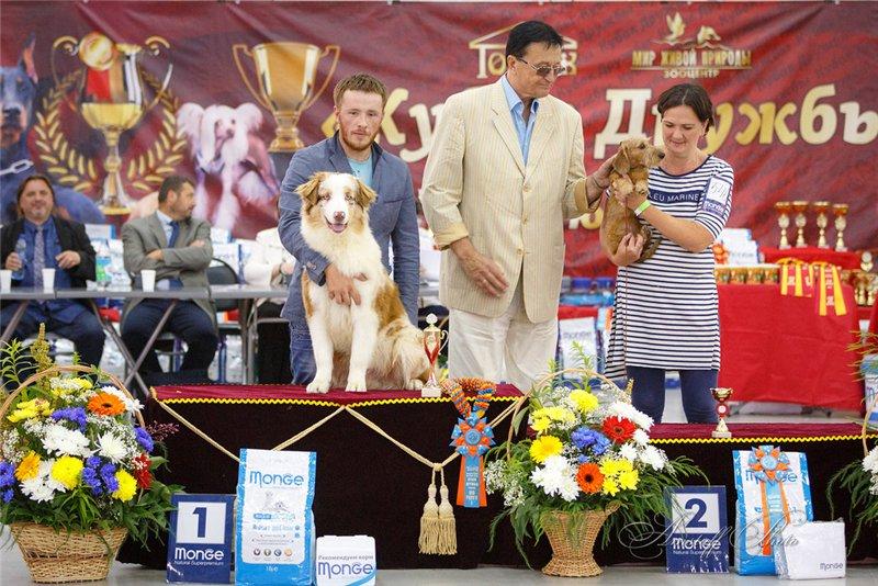 Выставочные успехи наших собак - 5 - Страница 30 328704b0f010