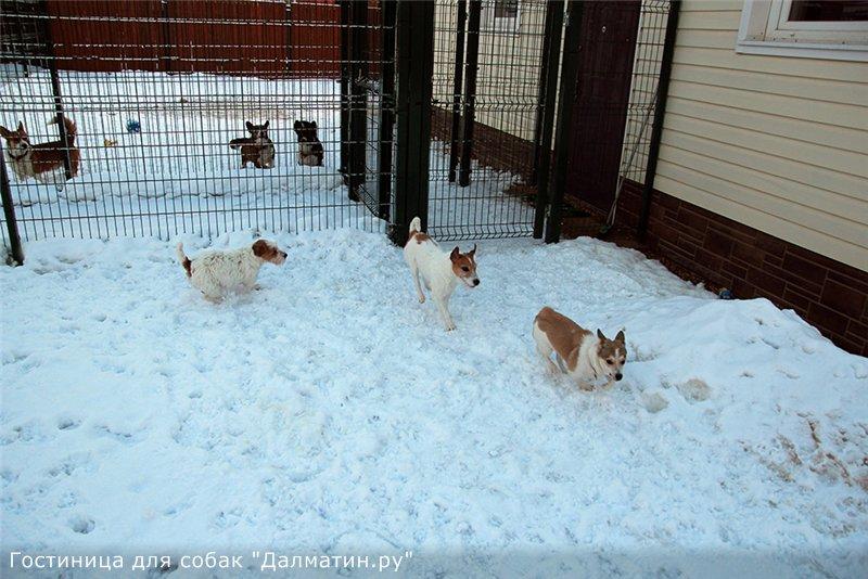 Семейная гостиница для собак в Дедовске (передержка) Ffa2378784e3