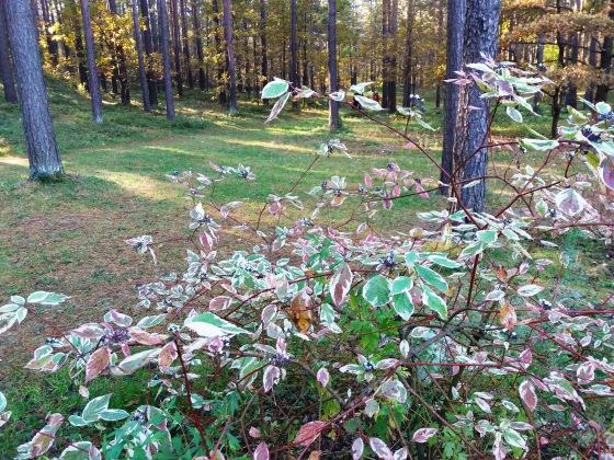 Осень, осень ... как ты хороша...( наше фотонастроение) - Страница 8 E31e915fd4e4