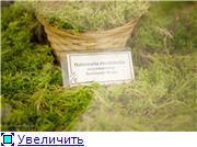 Выставка орхидей в Государственном биологическом музее им. К.А.Тимирязева Ee66c51429f9t