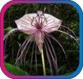 продам семена экзотических растений - Страница 3 4cbd8d8c83ce