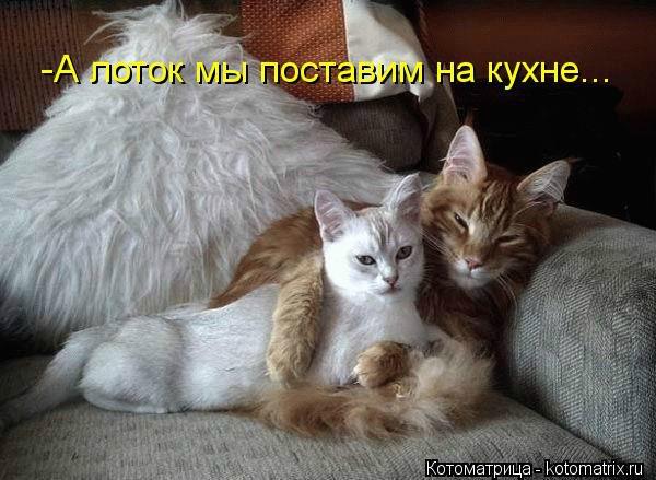 Звери в теме;) 34ff9833d170