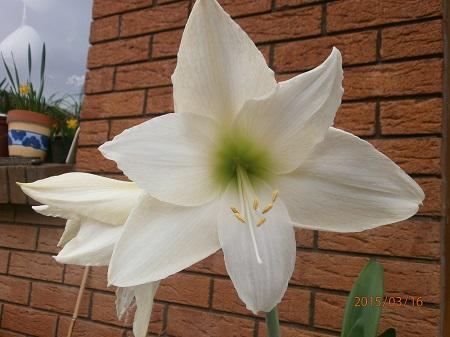 Разводите ли дома цветы и какие? - Страница 34 B07c61d5cc52