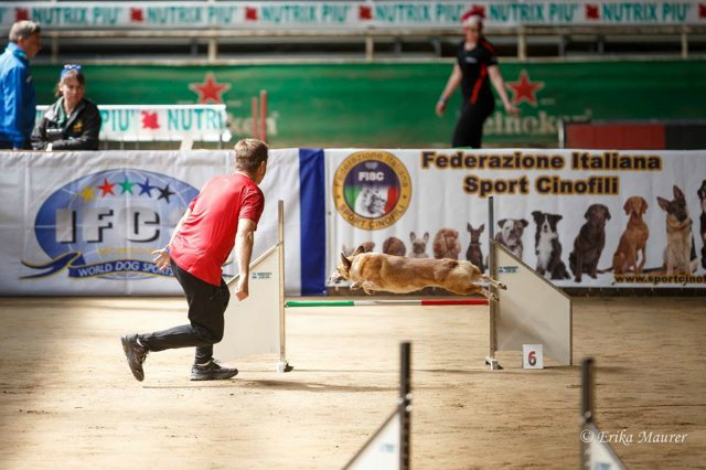 8 - 12 апреля 2015 г World Agility Championship IFCS 2015 6cd3e4005edf