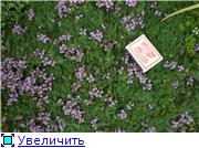 Растения для альпийской горки. - Страница 2 843cf6caad79t