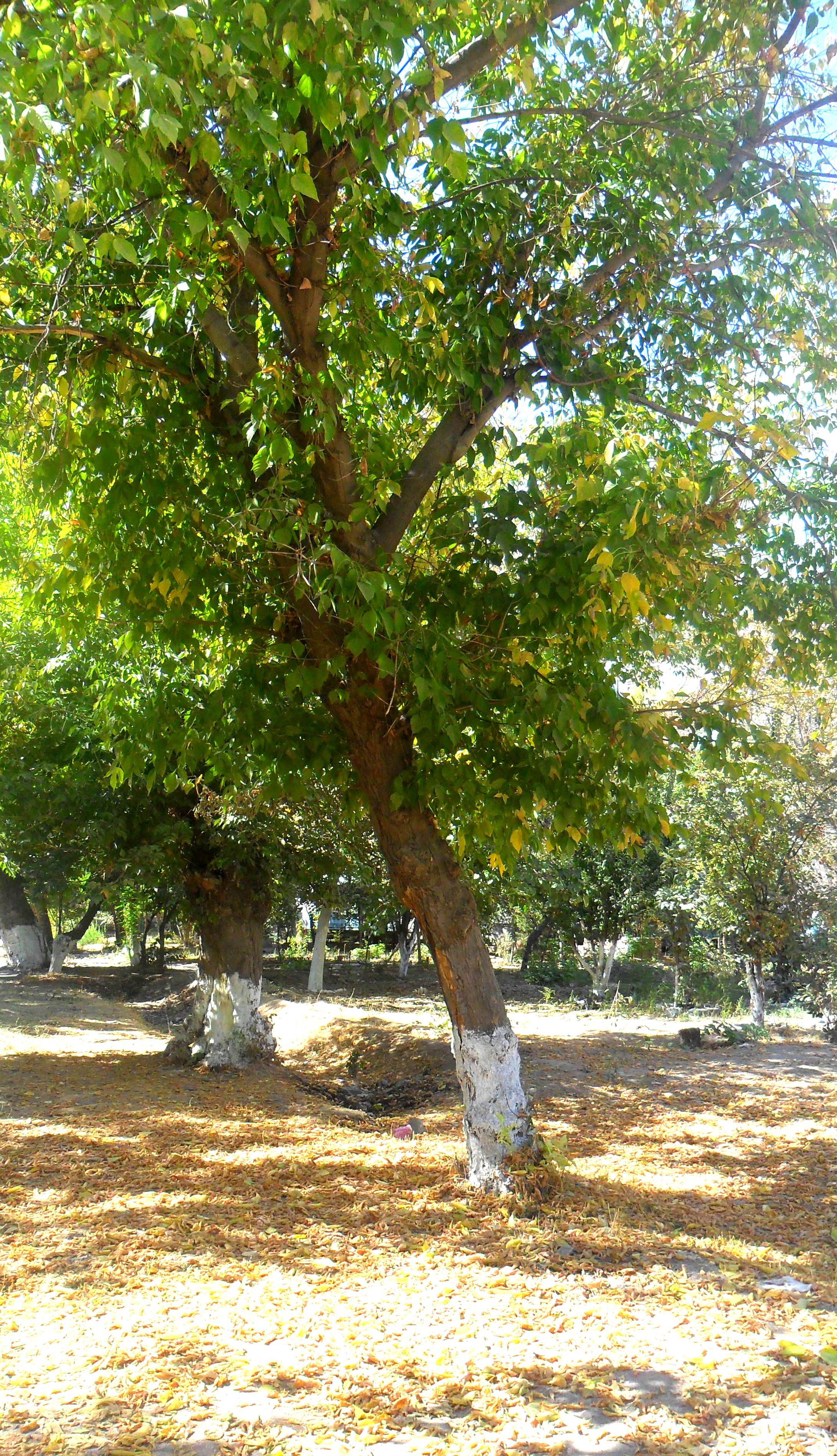 Фото конкурс: Осень в моем городе  9fda1784343e