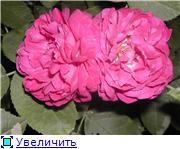 Specially for Karkela )))    Тестирование сербок и проч. - Страница 4 691f0bfc442dt