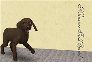 Собаки - Страница 5 5b62e83b5bee