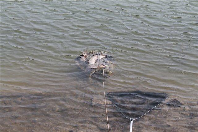 Рыбалка 2b0b59f31326