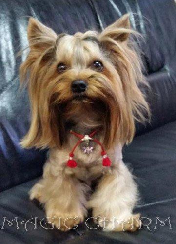 Magic Charm - ошейники, поводки, ринговки, вязаная одежда и другие аксессуары для собак 37fc9b6e9925