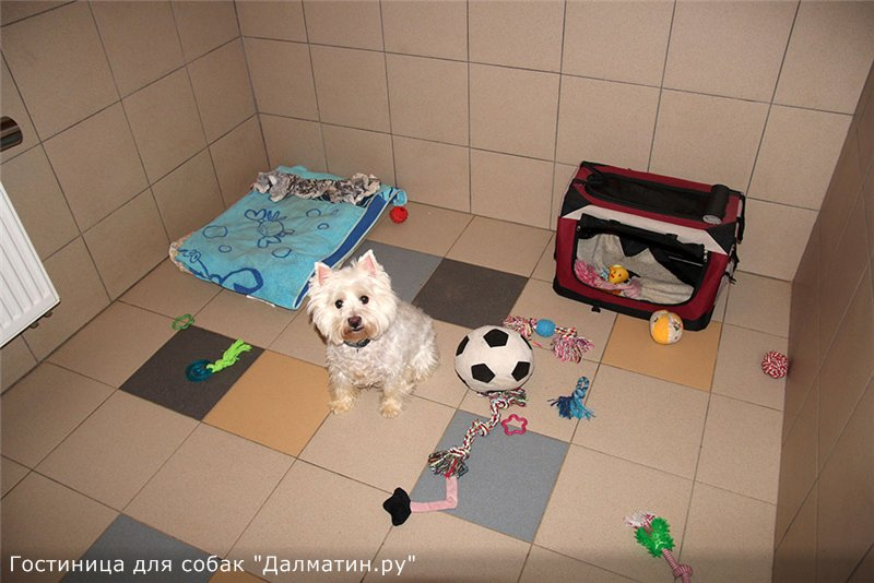 Семейная гостиница для собак в Дедовске (передержка) 1afe23022c7f