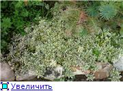 Растения для альпийской горки. 28c83d992bf7t