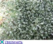 Растения для альпийской горки. A102f67f1f75t