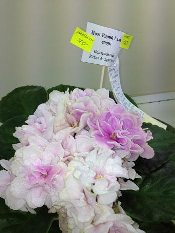 Выставка цветов - Страница 3 22126d5ce428