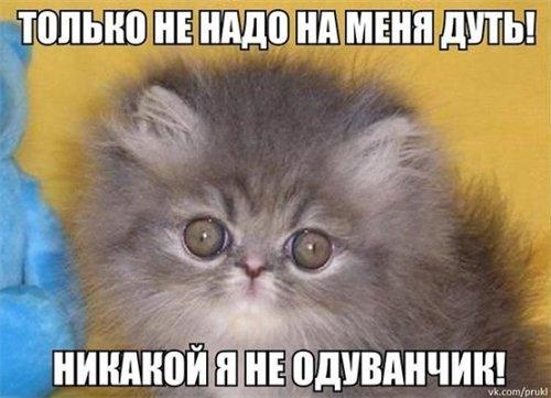 Сама по себе гулёна (о кошках) - Страница 2 65f8ace91b25